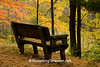 Bench for Fall Color Viewing, Waupaca County, Wisconsin