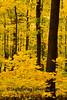 Autumn Scene with Yellow Woods, Sauk County, Wisconsin