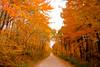 Fall Color, Sauk County, Wisconsin