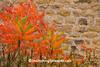Bright Orange Sumac Against Silo Stone, Sauk County, Wisconsin