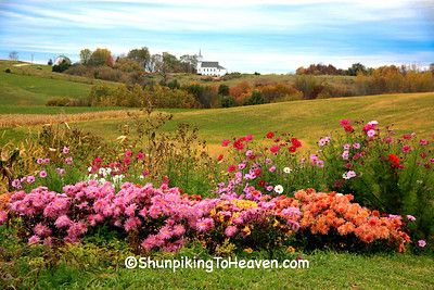 Fall Flowers and Country Church, Richland Co., Wisconsin