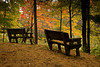 Two Benches for Fall Color Viewing, Waupaca County, Wisconsin