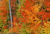 Fall Color, Shawano County, Wisconsin