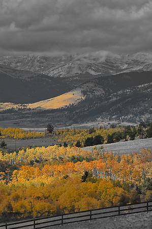 Aspen and Rail Fence