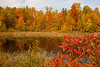 Fall Color on a Pond, Langlade County, Wisconsin