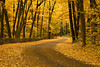Autumn Road, Devil's Lake State Park, Sauk County, Wisconsin