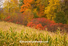 Autumn Harvest Time with Corn and Fall Color, Richland County, Wisconsin