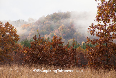 Fog at the Oak Barrens, Dane County, Wisconsin