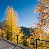 Foresta autunnale su strada al Lussari  231012-251627 v100