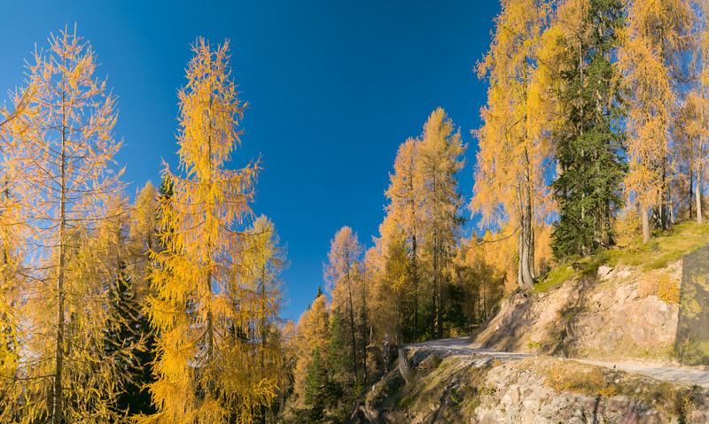 Foresta autunnale su strada al Lussari  231012-257280 v100