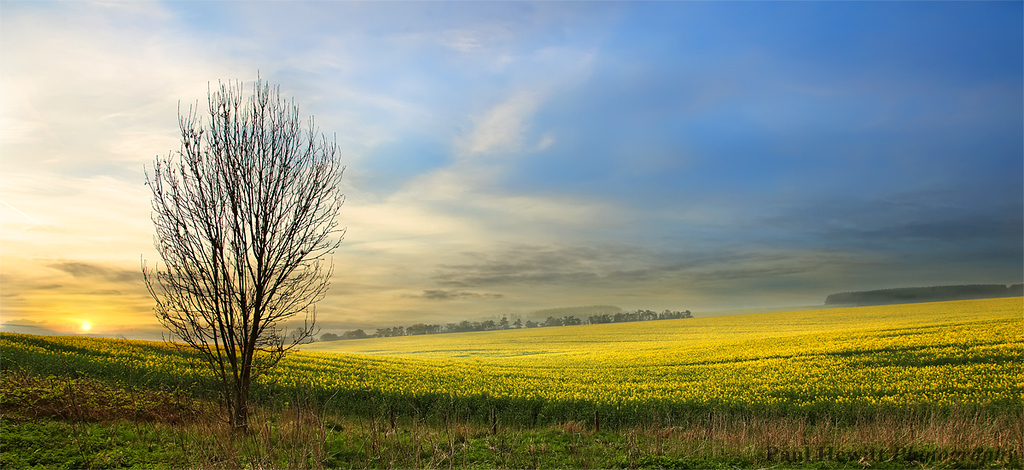 Winchester Fields