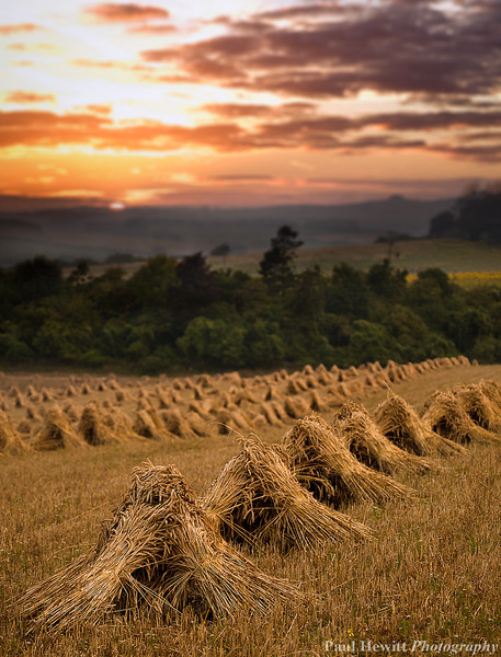 Stooks at King's Somborne, Hampshire 3