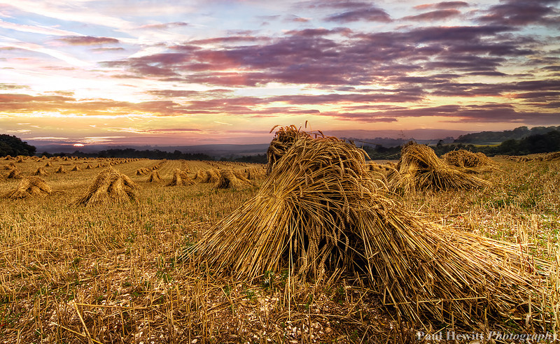 Stooks at King's Somborne, Hampshire 4