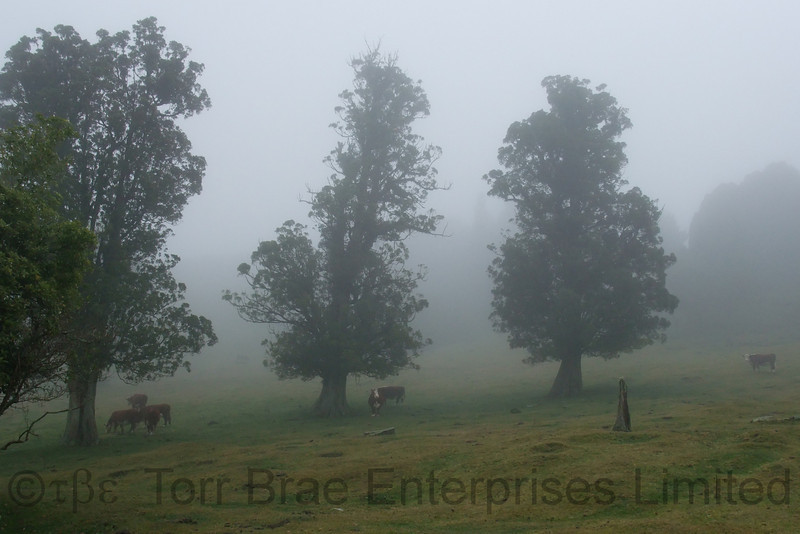 A misty July afternoon, Manawahe Hills