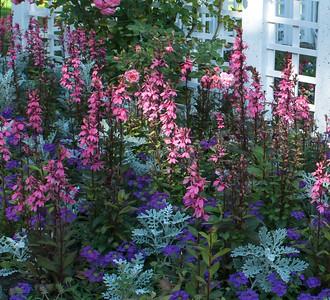 perennial Lobelia, Verbena, Dusty Miller.,,,Butchart Gardens