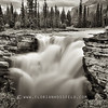 Athabaska Falls - Jasper (color version available)