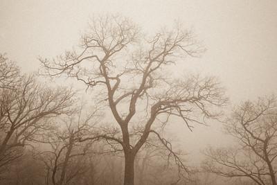 Trees in Fog I ~ Onion Mountain Overlook, Blue Ridge Parkway ~ April 2010