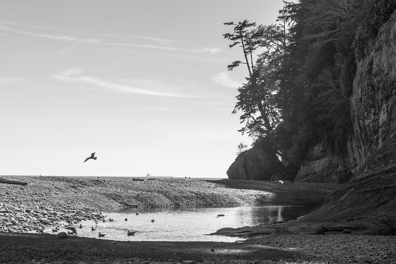 Camper's Cove - West Coast Trail