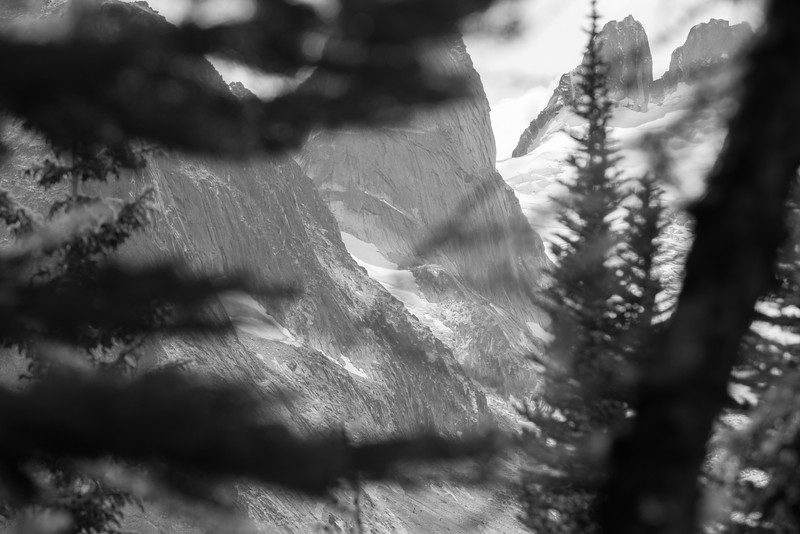 Bugaboos through the Trees