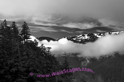 Morning clouds on the drive to Hurricane Ridge, Olympic National Park.