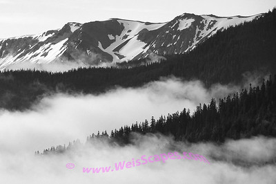Morning clouds on the drive up to Hurricane Ridge, Olympic National Park.