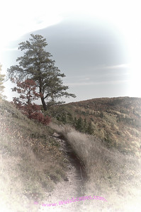 """Escrapment trail, east of """"Lake of the Clouds"""" Overlook, Porcupine Mountain State Park, Michigan."""
