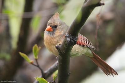 Birds at the feeder. 5/15/20