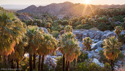 Beautiful Palm Oasis in Baja California