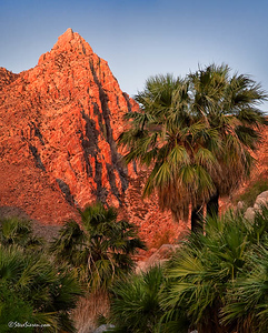 Guadalupe Canyon Baja California Secluded palm oasis in the middle of the Sonoran Desert.
