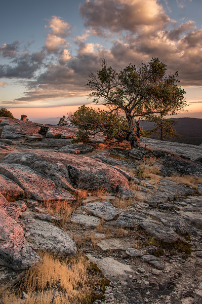 Oak tree at Bald Rock