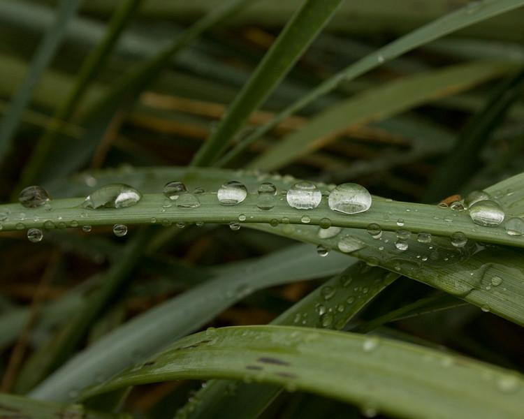 rain on a leaf
