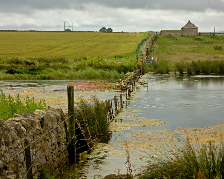 A pond near Bamburgh