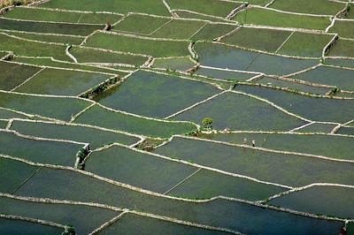 farmers traversing rice terraces