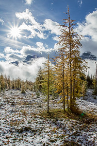 The Larch valley - fresh snow and golden larches made for a spectacular morning in the Larch valley, the contrast of white snow with the exploding colours was amazing to see.