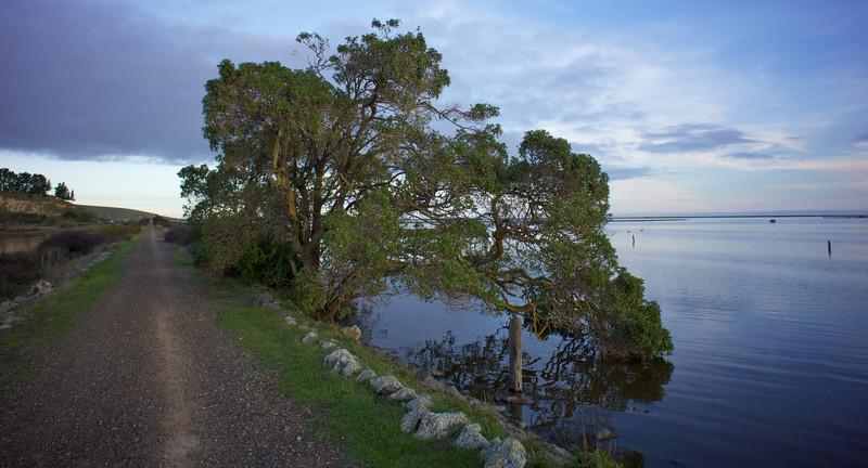 Rail trail tree Kaituna