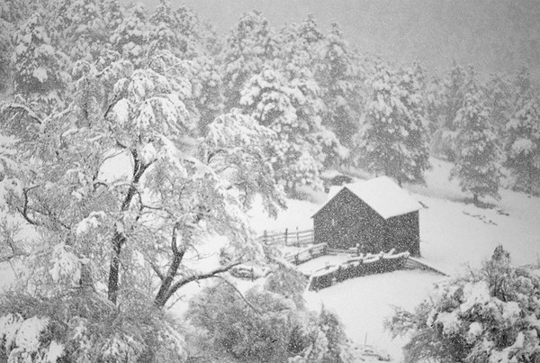 black and white nature photography. blizzard lack and white