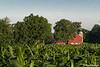Barns and Farms : Elkhart County Barn