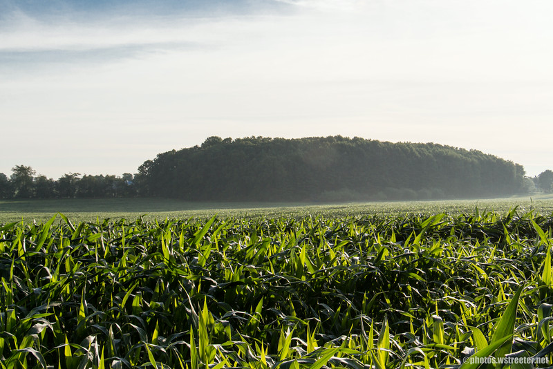 """While shooting the photos for the """"Red Barn, Green Field"""" photos I thought this corn field would make a nice shot. I actually like the photos of this taken with my Samsung Galaxy S5 better."""