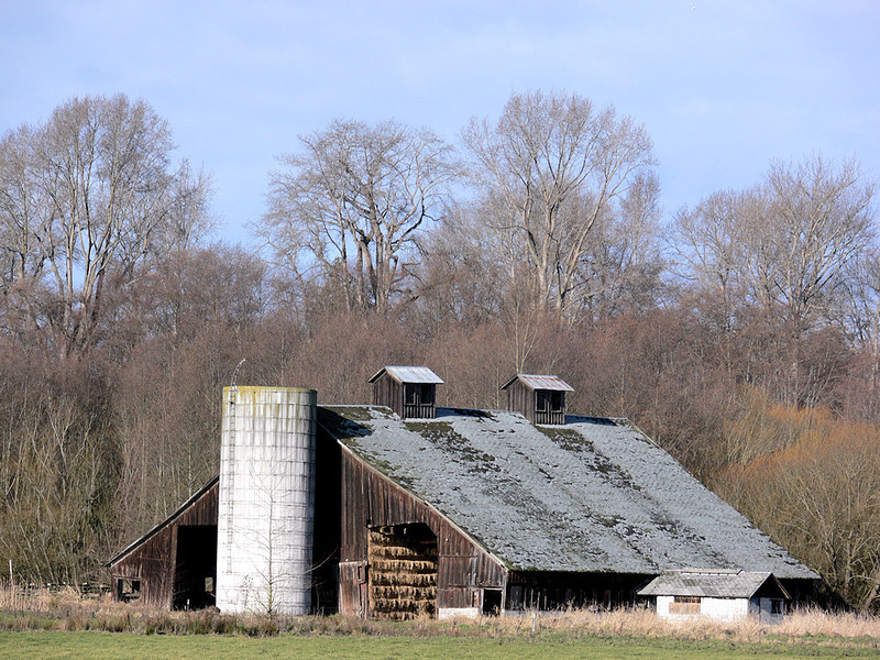 Another view of Cassidy/Mapes Barn (1890), this time looking northwest towards the Dungeness River.