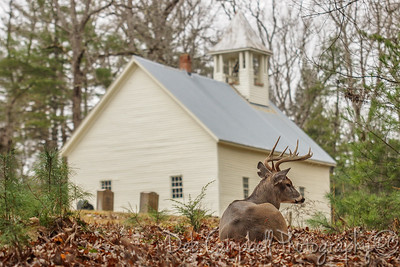 Buck at Primitive Baptist Church