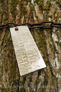 Pearl Harbor Tree Tag