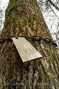 Pearl Harbor Tree Tag