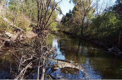 Bassett Creek in Wirth Park