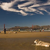 A dog's life in San Francisco: A husky taking a dip in front of the Golden Gate at Crissy Field.