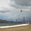Hang glider: a seagull over Baker Beach.