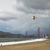 Hang glider: a seagull over Baker Beach.