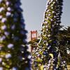 A botanical view of the Golden Gate Bridge.