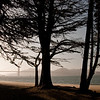 Nature's shadow play in the afternoon sun not far from Crissy Field.