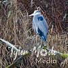 5  G Blue Heron Pan