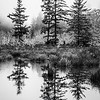 79  G Cape D Reflection Trees BW V